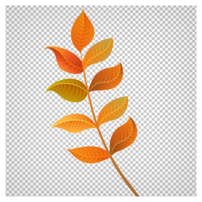 دانلود فایل دوربری شده ساق و برگ پاییزی با پسوند png