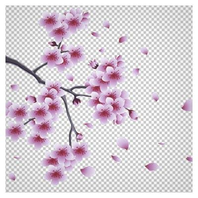 دانلود فایل دوربری شده شکوفه های صورتی با فرمت png