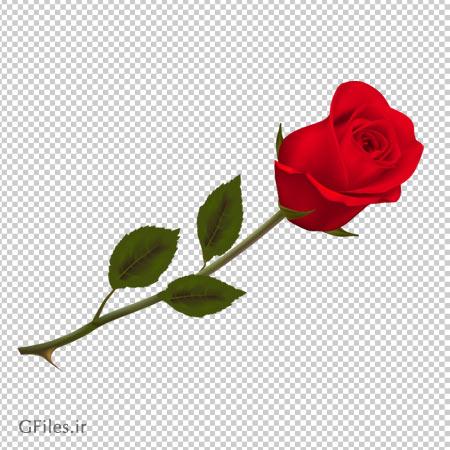 دانلود شاخه گل غنچه رز قرمز به صورت ترانسپرنت و فاقد بکگرند