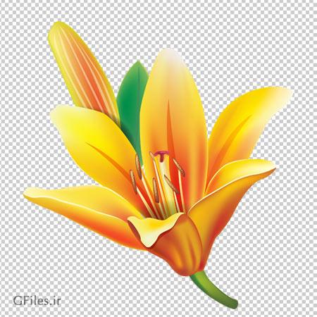 دانلود تصویر گل لیلیوم زرد دوربری شده با فرمت png