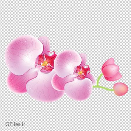 دانلود شاخه گل ارکیده صورتی با پسوند png و فاقد بکگرند