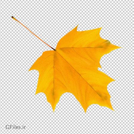 دانلود برگ زرد پاییزی درخت چنار بصورت فایل دوربری شده و پسوند png