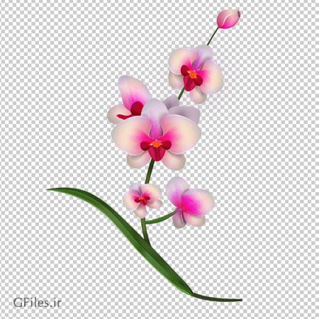دانلود گل ارکیده سفید صورتی کارتونی بصورت فایل با پسوند png و بدون بکگرند
