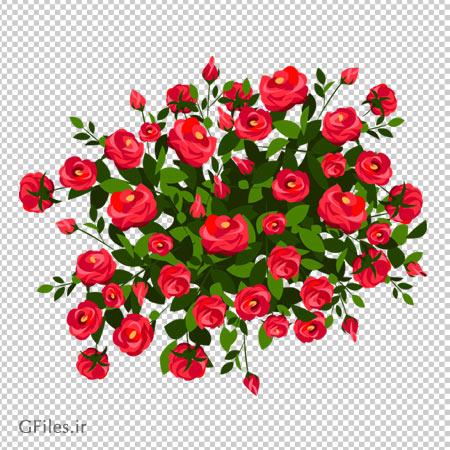 دانلود درختچه گل رز قرمز بصورت فایل دوربری شده فاقد بکگرند