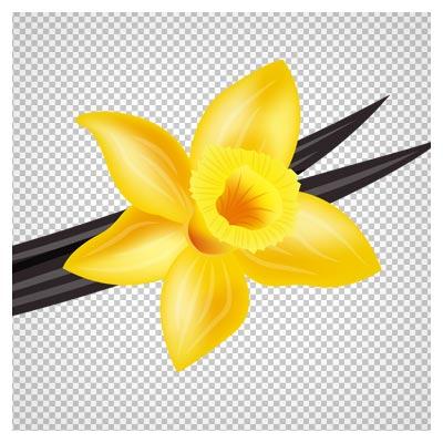 دانلود گل نرگس زرد بصورت فایل ترانسپرنت و فاقد بکگرند