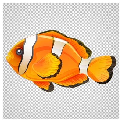 دانلود تصویر دلقک ماهی آب شور بصورت فایل فاقد پس زمینه با پسوند png