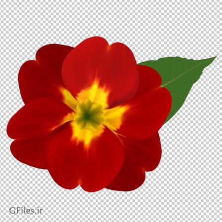 دانلود گل قرمز شبنم بصورت فایل دوربری شده و فاقد پس زمینه
