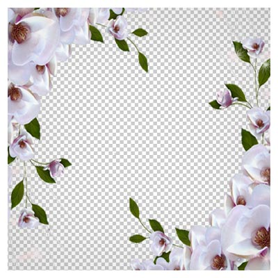 دانلود قاب و فریم با طرح گل های سفید بهاری بصورت فایل بدون بکگرند و دوربری شده