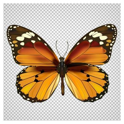 فایل png پروانه طرح دار قهوه ای بدون پس زمینه