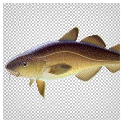 ماهی کپور بدون پس زمینه و دوربری شده با فرمت png