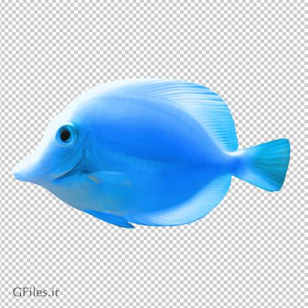 ماهی آبی رنگ کارتونی، دانلود بصورت فایل ترانسپرنت و بدون بکگرند