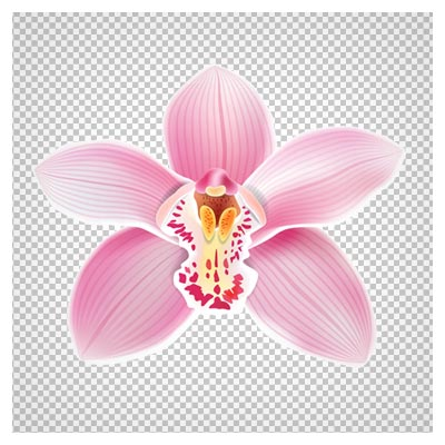 تک گل ارکیده صورتی ، دانلود بصورت فایل با پسوند png و بدون یکگرند