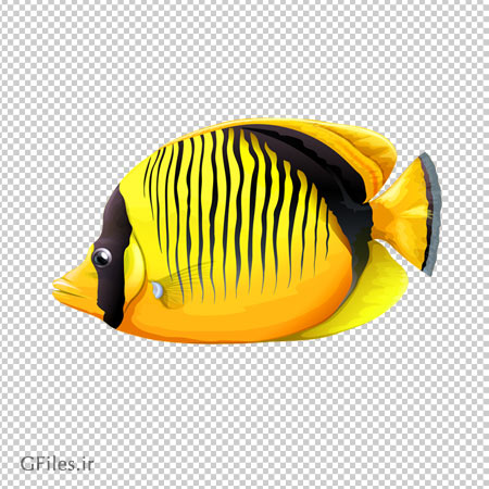 ماهی آب شور زرد رنگ ، دانلود بصورت فایل بدون پس زمینه