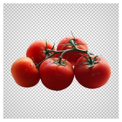خوشه گوجه فرنگی های رسیده ، دانلود بصورت فایل دوربری شده بدون پس زمینه