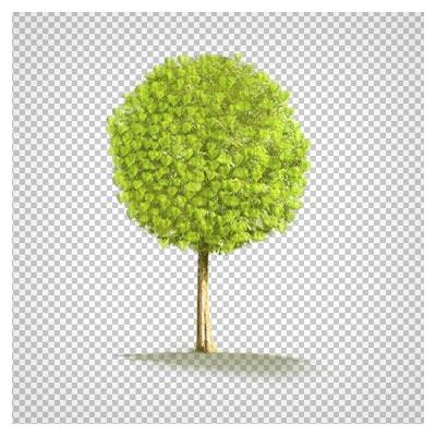 کلیپ آرت درخت سبز دایره ای ، دانلود بصورت فایل بدون پس زمینه