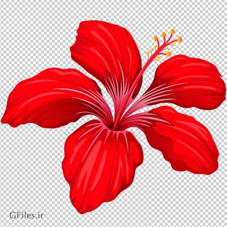 تصوی گل قرمز پنج برگ بدون پس زمینه و پسوند پی ان جی