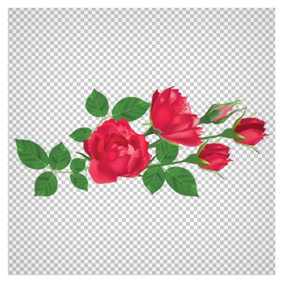 کلیپ آرت بوته گل رز قرمز با فرمت پی ان جی