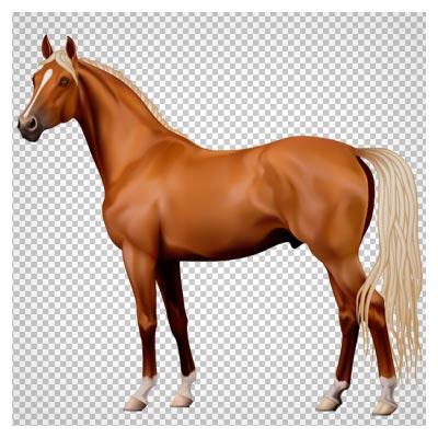 کلیپ آرت اسب قهوه ای دم سفید با فرمت پی ان جی