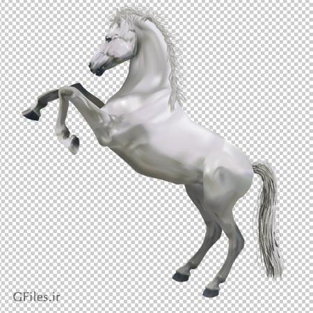 تصویر اسب سفیده ایستاده بصورت فایل پی ان جی و بدون پس زمینه