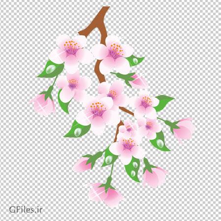 تصویر شاخه شکوفه ها و شبنم بصورت فایل پی ان جی و دوربری شده