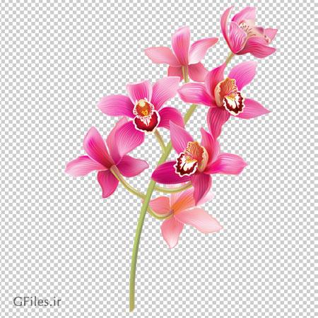 دانلود تصویر شاخه گل ارکیده صورتی بدون پس زمینه با فرمت پی ان جی