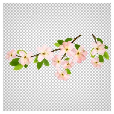 تصویر کلیپ آرت شاخه پر از شکوفه با پسوند پی ان جی بدون پس زمینه