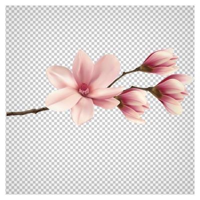 تصویر شاخه کوچک شکوفه های صورتی به صورت ترانسپرنت و فاقد بکگرند