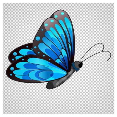 دانلود کلیپ آرت پروانه آبی طرح دار بدون پس زمینه با فرمت پی ان جی