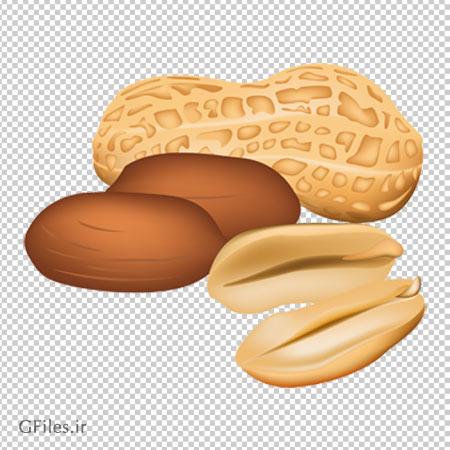 کلیپ آرت بادام زمینی مغز شده با فرمت png و به صورت ترانسپرنت