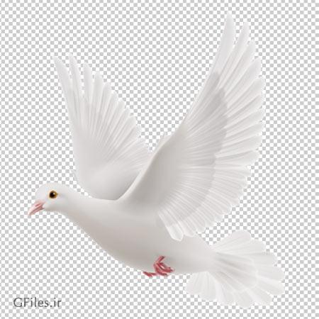 عکس کبوتر سفید در حال پرواز به صورت فایل ترانسپرنت و فاقد بکگرند