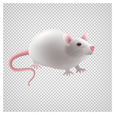 تصویر موش سفید آزمایشگاهی با پسوند پی ان جی