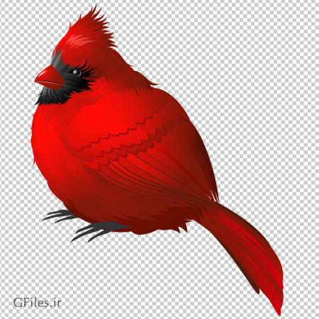 کلیپ آرت عکس پرنده قرمز با فرمت پی ان جی