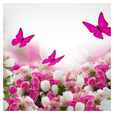 عکس با کیفیت HD از پس زمینه با گل های رز صورتی و سفید