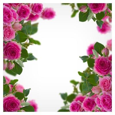 دانلود عکس رایگان از فریم و قاب با تزئین گل های زیبای رز صورتی