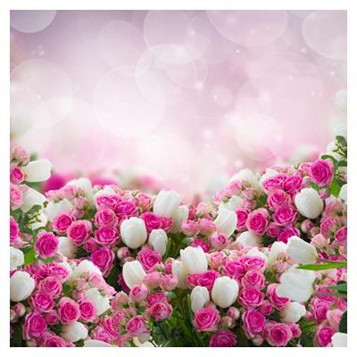 دانلود عکس رایگان و با کیفیت از پس زمینه با طرح گل های زیبای رز صورتی و سفید