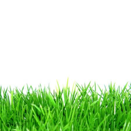 تصویر پس زمینه رایگان از چمن های بلند سبز ، با فرمت jpg
