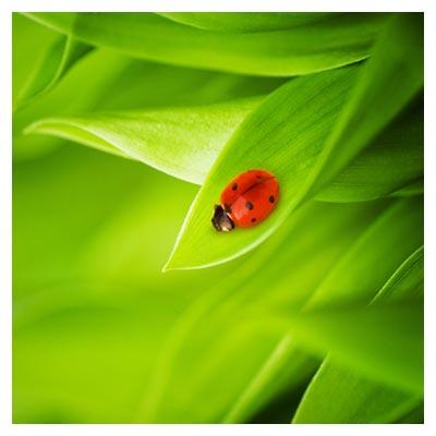 عکس رایگان برگ گیاه سبز و کفشدوزک ، از مجموعه عکس های شاتر استوک