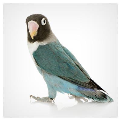 عکس پرنده طوطی سبز رنگ زیبا و دوست داشتنی به فرمت jpg