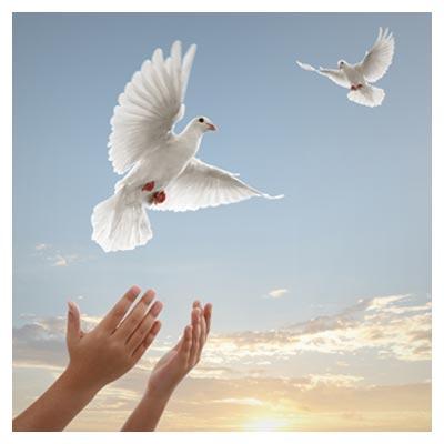عکس رهایی کبوتر های سفید در آسمان صاف و آفتابی