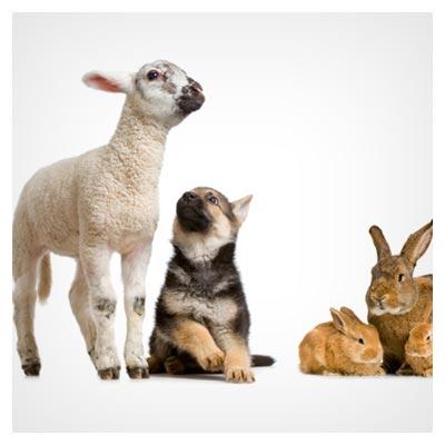 عکس زیبای حیوانات کوچکی اردک و جوجه و مرغ و خرگوش و گوسفند