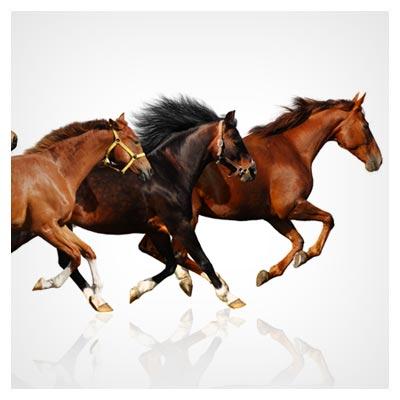 عکس دویدن چند اسب مسابقه قهوه ای به یک سمت برای برنده شدن