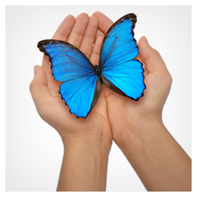پروانه آبی در دست انسان به نماد محبت و احساس لطیف