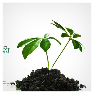 سبز شدن چند برگ تازه از بین خاک تیره رنگ به صورت مفهومی و نمادین