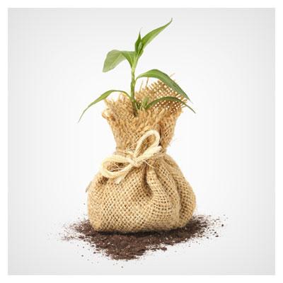 عکس نگه داری از گیاه سبز در گونی برای تکثیر و رشد سریع تر آن