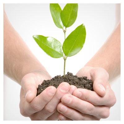 گیاه سبز روییده شده باغچه در قسمتی از خاک در دو دست یک مرد