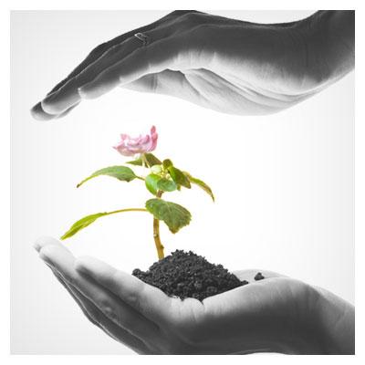 عکس قرار گرفتن دستان یک انسان در بالا و پایین (مراقبت از جوانه) یک گل صورتی جوانه زده