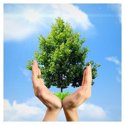 عکس مفهومی دو دست که از بین آن ها درخت سبز و تنومند رشد کرده