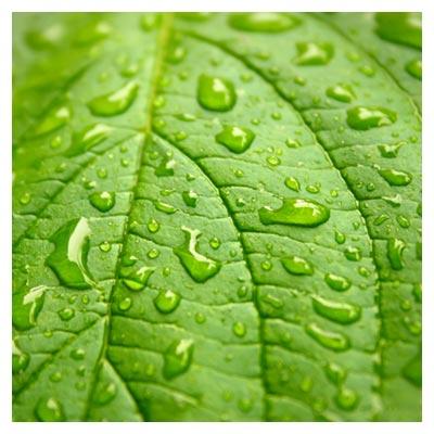 عکس قطرات شبنم بر روی یک برگ سبز از نمای نزدیک