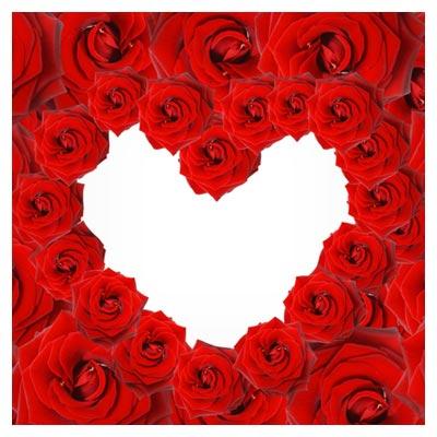 عکس رز های قرمز چیده شده در کنار هم به شکل یک قلب