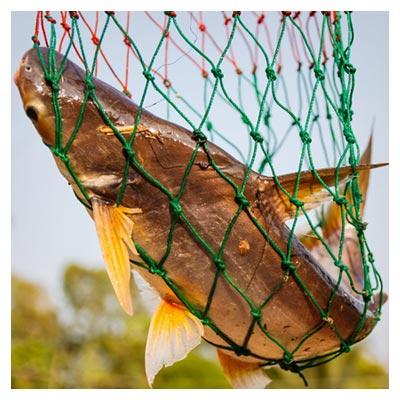 عکس تور ماهیگیری در حالت صید ماهی بزرگ با فرمت jpg